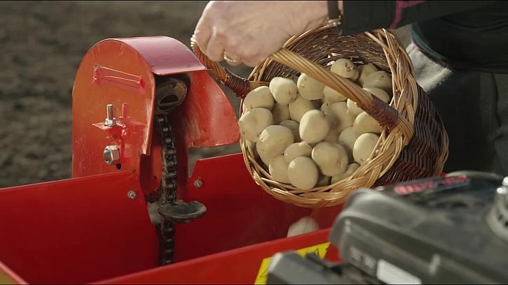 Víte, jak sázet brambory - jakou hloubku, kdy a jakou půdu?