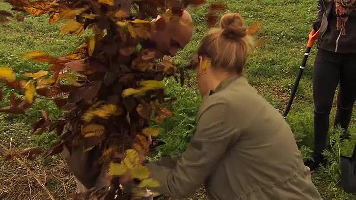 Zasazení stromu