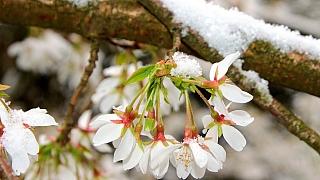 Duben v lidové meteorologii: Žij, vzrůstej a rozmnožuj se!