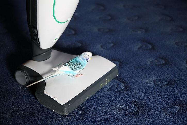 Čištění koberců – Kobold s nástavcem VF200 vyčistí koberce opravdu do hloubky