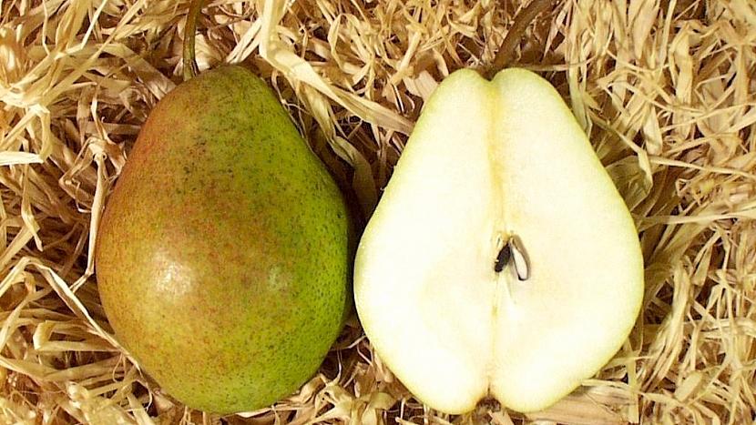 Zimní odrůda Bohemica