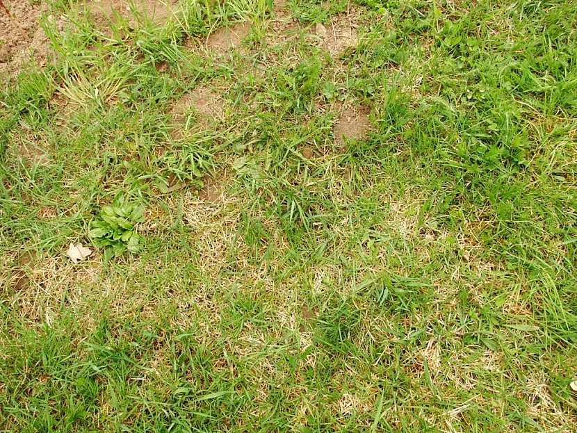 holá místa v trávníku