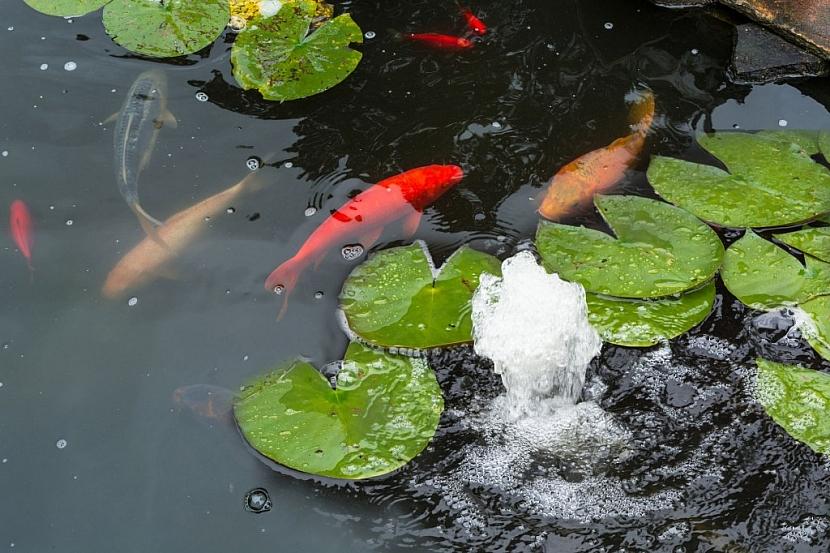 Ryby potřebují dostatečný přísun vzduchu