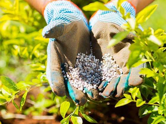 Výživa půdy je nutná celoročně z důvodu lepšího výnosu a zvýšení obranyschopnosti rostlin (Zdroj: Depositphotos)