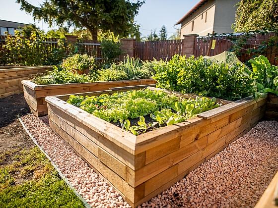 Pěstování ve vyvýšených záhonech má mnoho výhod (Zdroj: AGRO CS)