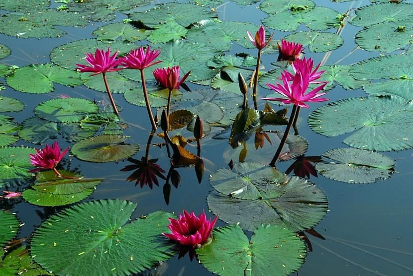 Bahenní rostliny vydrží pod vodou i silné mrazy