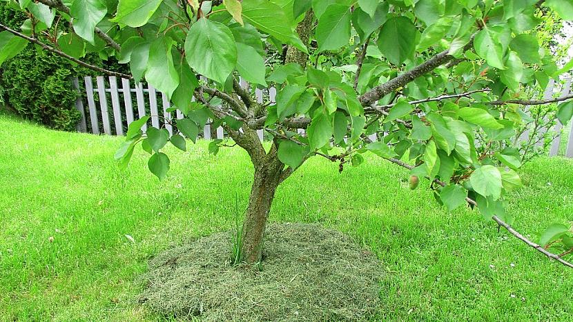 Jak zajistit rostlinám potřebnou vláhu bez nákupu mulčovací kůry 2