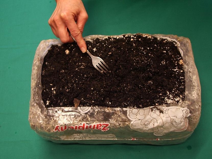 Aby povrch prorostl podhoubím, promíchejte ho vidličkou. Po 3 dnech kostku přeneste do chladu, kde brzy začne plodit