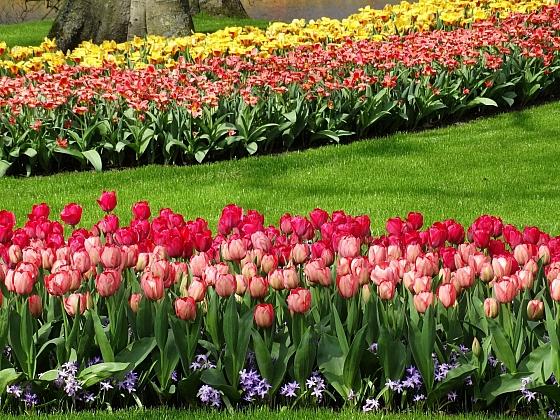 Jarní cibuloviny v okrasné zahradě
