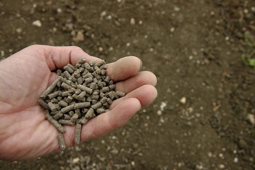 Do půdy zapravíme i vhodné hnojivo