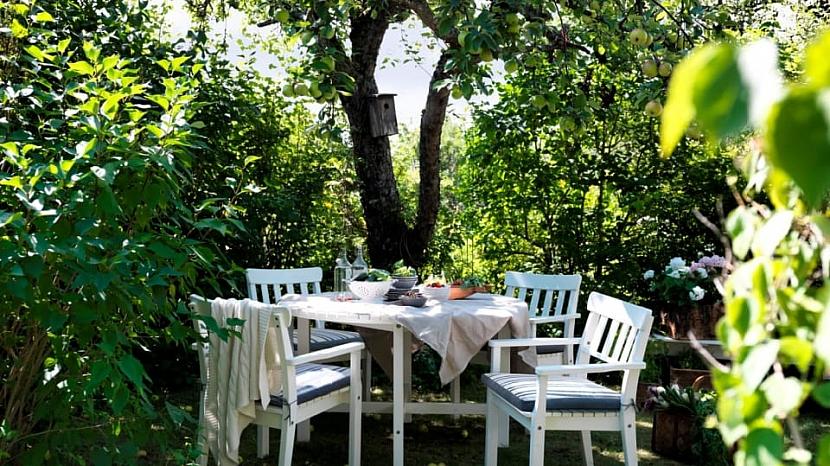 Aby byl venkovní nábytek z borovice co nejpevnější a nejodolnější, vyrábí se z tvrdého dřeva – husté vnitřní části kmene stromu.