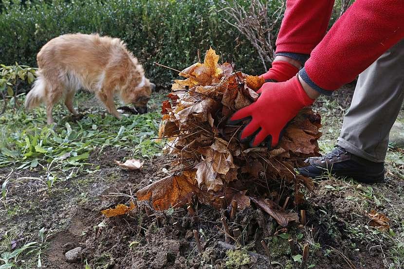 Zahradník chystá zahradu na zimu, sbírá listí