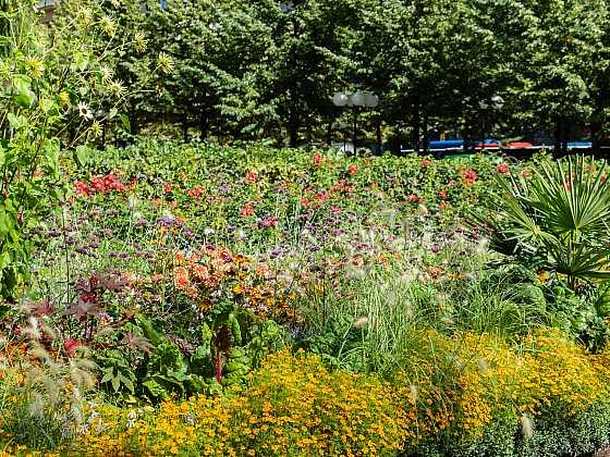Bohatě kvetoucí zahrada je pro opylovače nejlepší (Zdroj: Depositphotos)