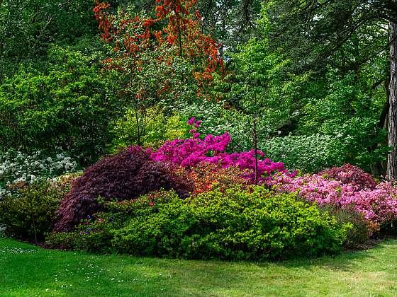 Při plánování zahrady, která je stinná a suchá, vybírejte odpovídající druhy rostlin (Zdroj: Depositphotos (https://cz.depositphotos.com))