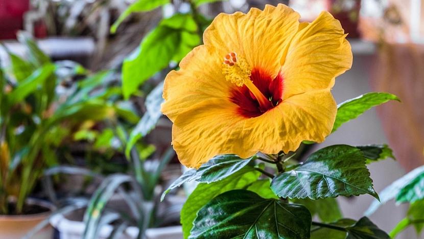Předpověď počasí a zahrada: začněte s letněním pokojových rostlin