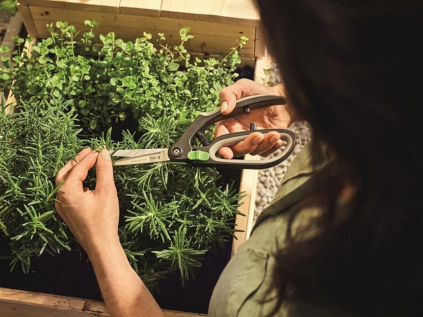 pěstujeme bylinky