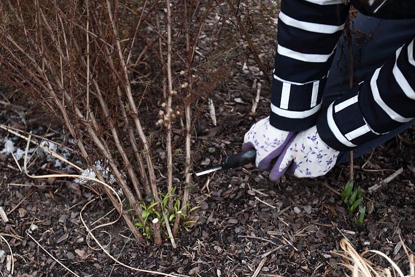 Jarní střih trvalek