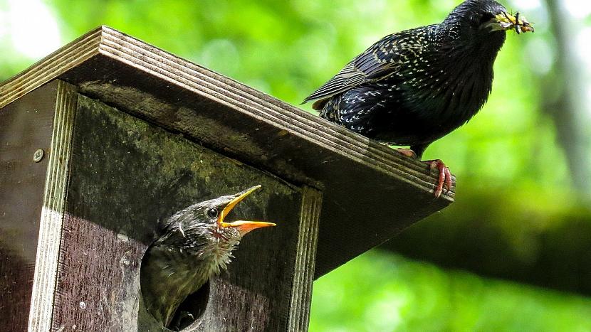 Jak dopřát užitečným ptákům na zahradě bydlení na míru 1