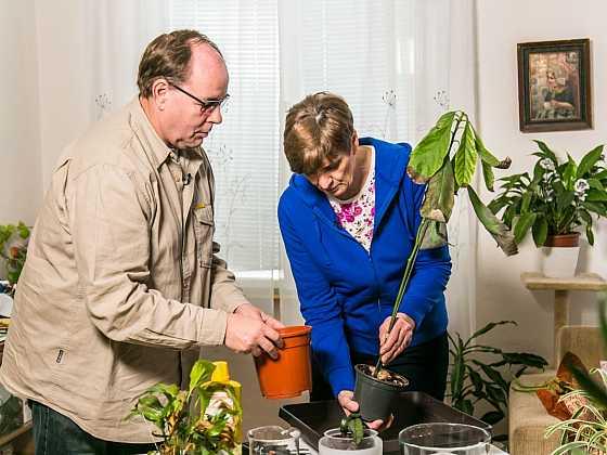 Jak pečovat o pokojové květiny po zimě (Zdroj: archiv FTV Prima)