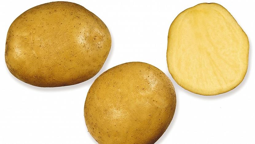 Brambory: velmi raná odrůda MAGDA
