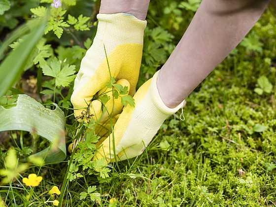 Úporné plevele na zahradě mohou hodně znepříjemnit život (Zdroj: Depositphotos)
