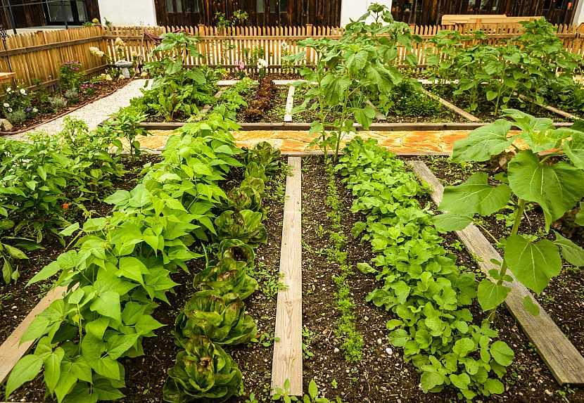 Smíšený záhon se zeleninou