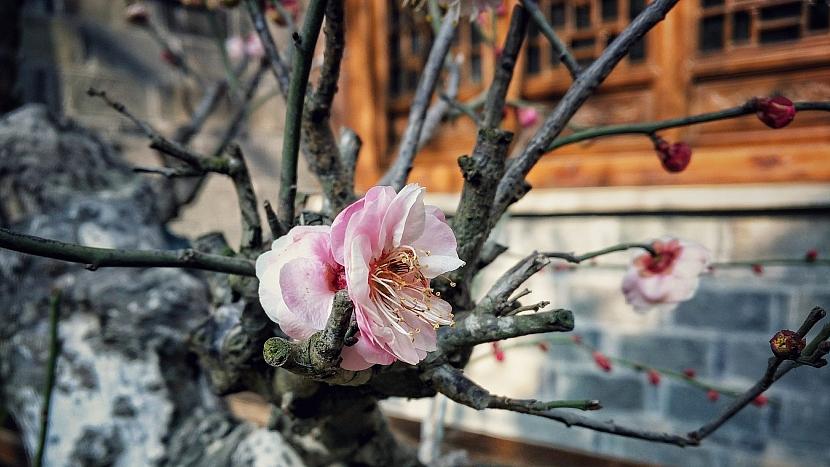 Co dělá mírná zima se zahradou: rostliny nevědí, na čem jsou