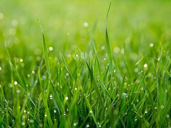 4 jednoduchá pravidla pro krásný trávník (Zdroj: ESCUBE)