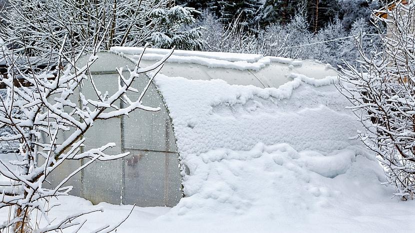 Zahrada v únoru: máme-li vyhřívaný skleník, vyséváme a vysazujeme první jarní zeleninu