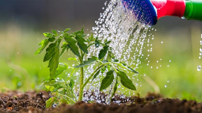 Přírodní zahrada: optimální poměr pro hnojení jednou měsíčně je 1 díl zákvasu a 10 dílů vody