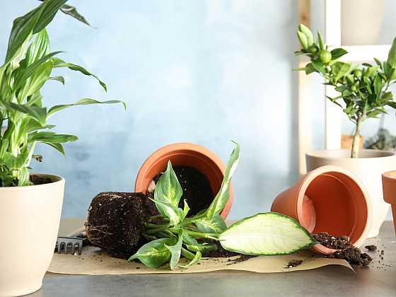 V březnu nezapomeňte přesadit pokojové rostliny (Zdroj: Depositphotos)