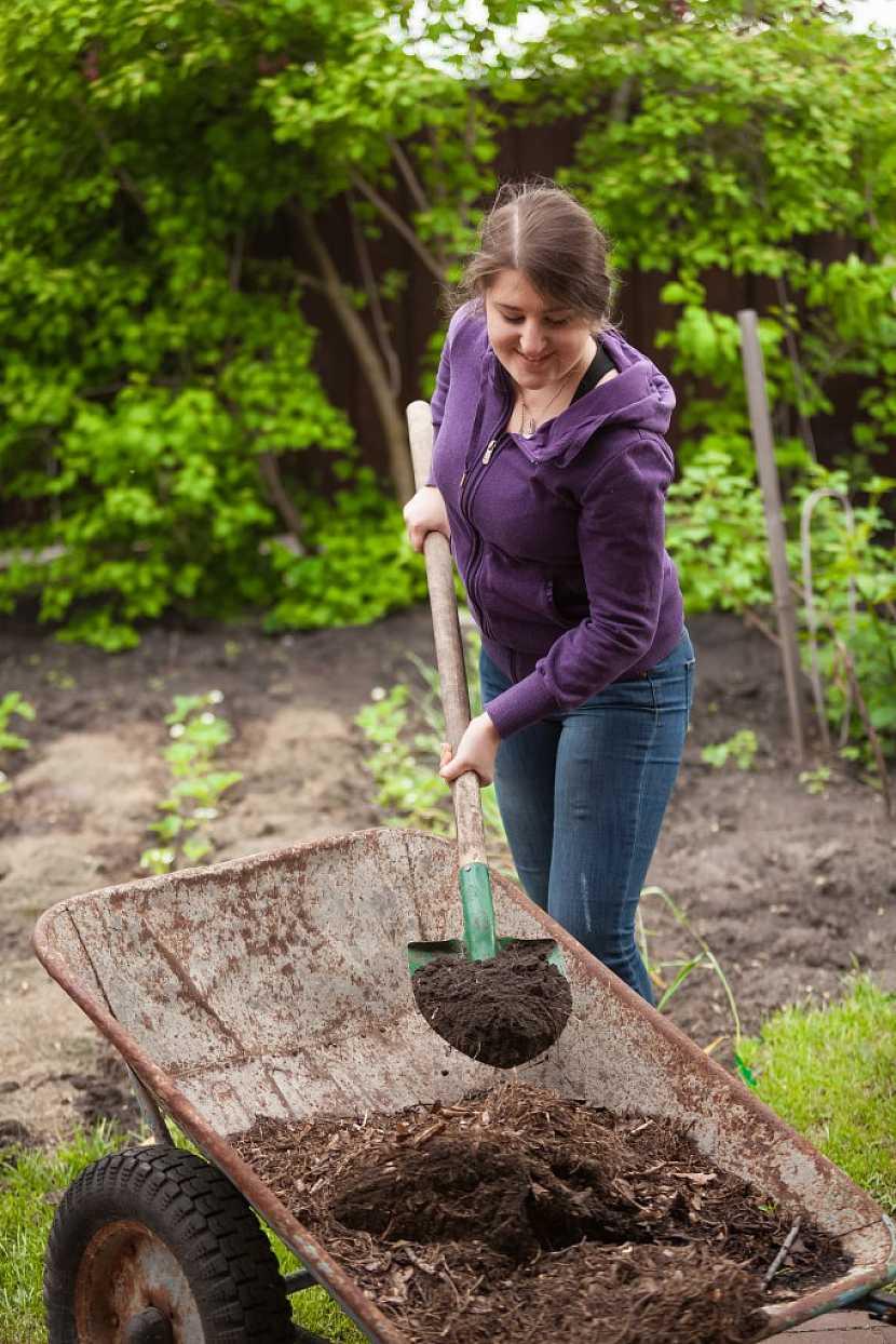 Při zpracování půdy použijte kompost, tím založíte na bohatou úrodu