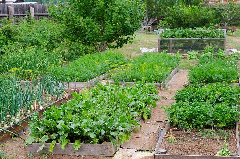 Užitková zahrada je zaměřena na pěstování zeleniny nebo ovoce