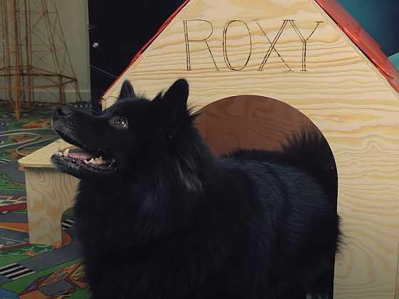 Vyrobte svému psu boudu s osvětlením (Zdroj: 3Dsimo)