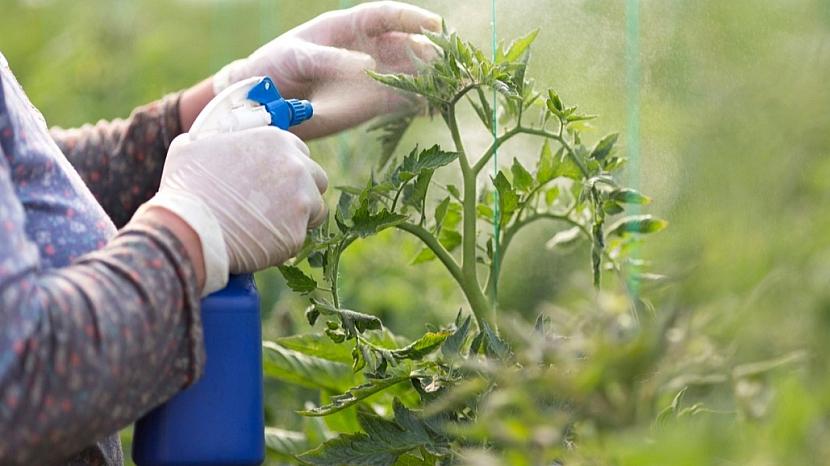 Předpověď počasí a zahrada: ochrana rostlin před škůdci
