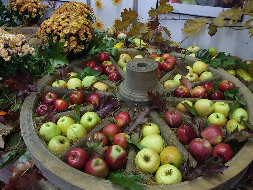 Odrůdy
