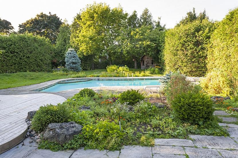 Bazén s okolní výsadbou