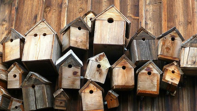 Ptačí budky jsou hlavně zedřeva s 20mmtloušťkou,případně kombinují dřevo sjinými materiály.