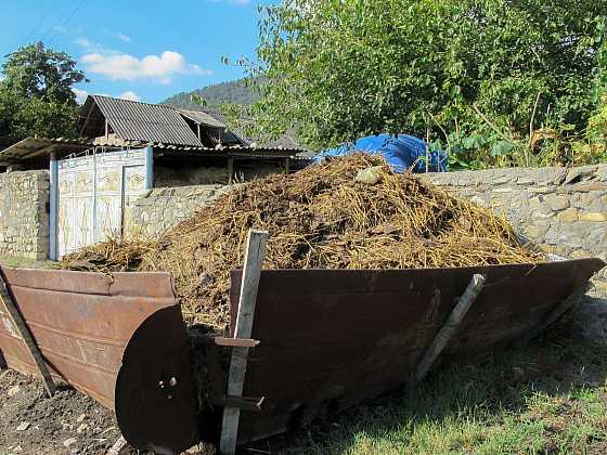 Troufli byste si použít sloní hnojivo nebo dáte přednost klasice? (Zdroj: Depositphotos)