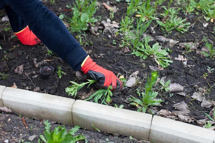 Přípravu záhonů zahájíme mechanickým odstraněním plevelů