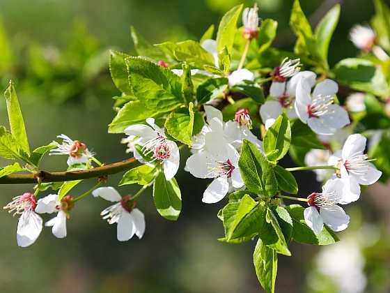 Jarní kouzlo kvetoucích rostlin vám zpříjemní dny (Zdroj: Depositphotos)