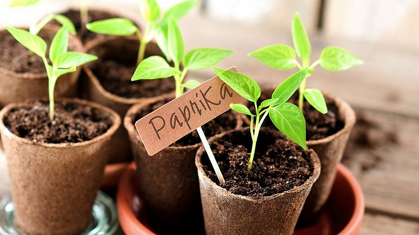 Jak pěstovat zeleninu pro labužníky 1