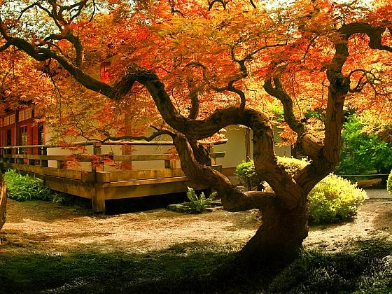 Tvarovaný strom se stane ozdobou celé zahrady (Zdroj: Depositphotos)