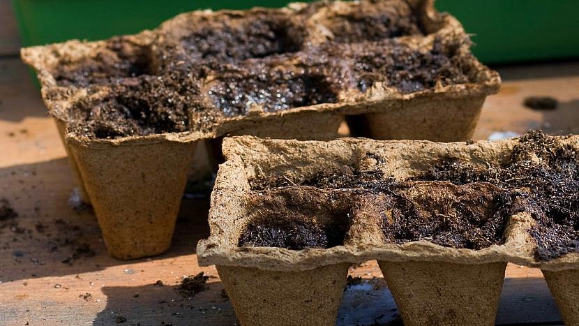 Jak přitáhnout děti k zahradničení? Vsaďte na fazole! 4