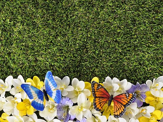 Rozkvetlý trávník se vrací do módy (Zdroj: Depositphotos)