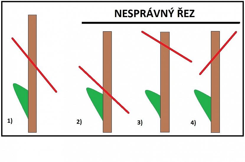 Schéma naznačuje správný řez na pupen nebo na očko. Správná varianta je 1, větev je zakrácená několik milimetrů na očkem šikmým řezem. Další jsou nesprávné: 2) řez je proveden příliš blízko pupenu, 3) řez je příliš daleko od pupenu, 4) řez má špatný sklon