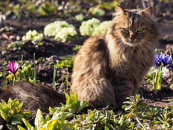 Jak zabránit, aby kočky nevyhrabávaly hlínu ze záhonů nebo květináčů (Zdroj: Depositphotos)
