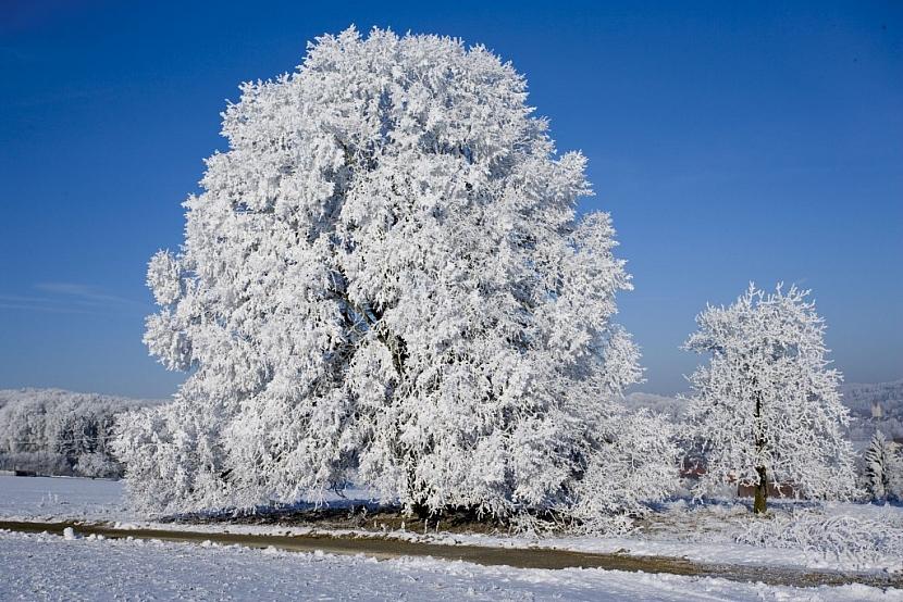 Zima na zahradě: praktické rady a tipy