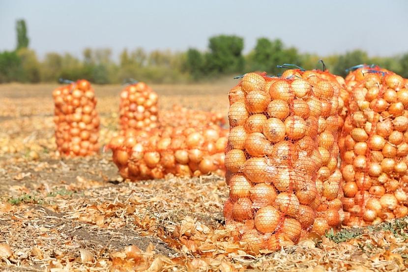 Kvalitní půda, prověřená sadba a průběžná péče o rostliny zajistí dobrou úrodu