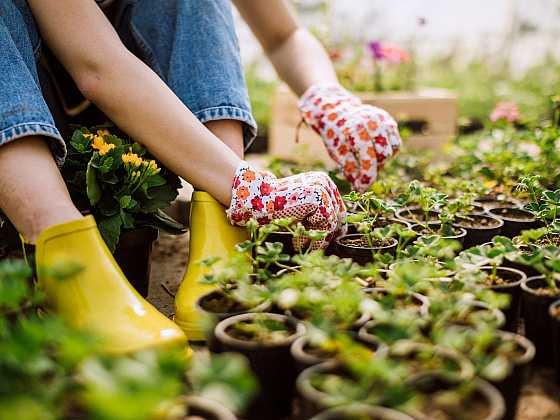 Staňte se úspěšným pěstitelem (Zdroj: WOLF Garten)